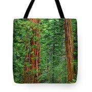 Giant Sequoias Sequoiadendron Gigantium Yosemite Np Ca Tote Bag