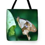 Giant Swallowtail Tote Bag