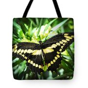 Giant Swallowtail Tote Bag
