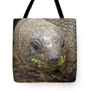 Giant Tortoise Tote Bag