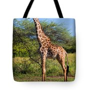 Giraffe On Savanna. Safari In Serengeti Tote Bag