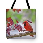 Give Me Shelter - Male Cardinal Tote Bag by Kerri Farley