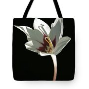 Glad Curves Tote Bag