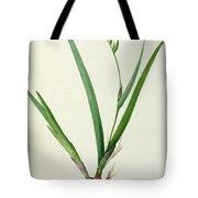Gladiolus Cardinalis Tote Bag