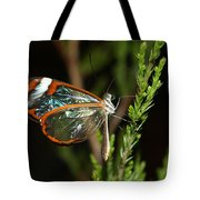 Glasswinged Butterfly Tote Bag