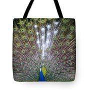 Glassy Peacock  Tote Bag