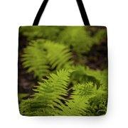 Glimmering Ferns Tote Bag
