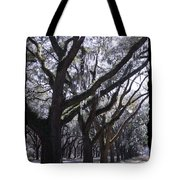 Glorious Live Oaks With Framing Tote Bag