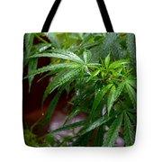 Glorious Rain Tote Bag