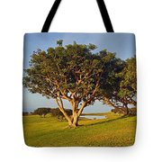 Glory In The Morning Txb Tote Bag