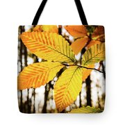 Glowing Beech Leaf Branch Tote Bag