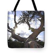 Gnarled Pine Tree And Sun Tote Bag