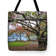 Gnarly Trees Of South Hilo Bay - Hawaii Tote Bag