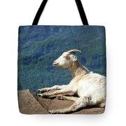 Goat Enjoy The Sun Tote Bag
