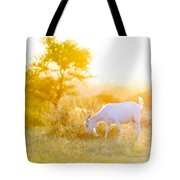 Goats Grazing At Sunset Tote Bag