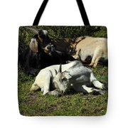 Goats Lying Under A Bush Tote Bag