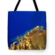 Goby On Wire Coral Tote Bag