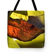 Gold Leaf In Fall Tote Bag