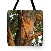 Golden Afternoon Glow Tote Bag