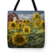 Golden Blooming Sunflowers With Red Barn Tote Bag