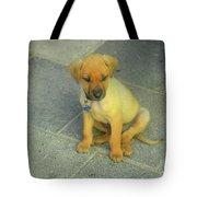Golden Cunucu Puppy In Aruba Tote Bag