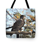 Golden Eagle Tote Bag