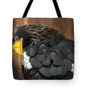 Golden Eagle Cleans Its Feathers Tote Bag