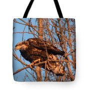 Golden Eagle Liftoff Tote Bag