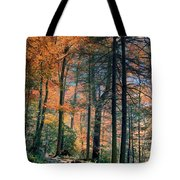 Golden Forest Path Tote Bag