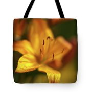 Golden Gazer Tote Bag