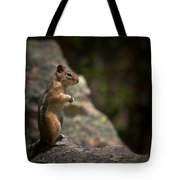 Golden Mantled Ground Squirrel Rocky Mountains Colorado Tote Bag