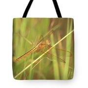 Golden Marsh Dragonfly Tote Bag