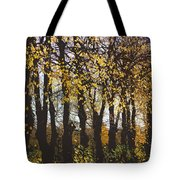 Golden Trees 1 Tote Bag