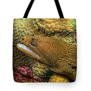 Goldentail Moray Tote Bag
