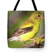 Goldfinch In The Early Morning  Tote Bag