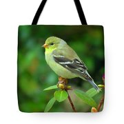 Goldfinch On Green Tote Bag