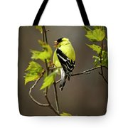 Goldfinch Suspended In Song Tote Bag