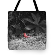 Good Morning Cardinal  Tote Bag