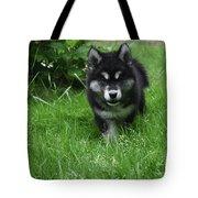 Gorgeous Alusky Puppy Dog Creeping Through Grass Tote Bag