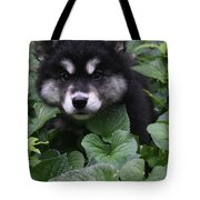 Gorgeous Alusky Puppy Playing Hide And Seek  Tote Bag