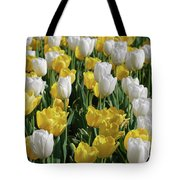 Gorgeous Blooming Field Of White And Yellow Tulips Tote Bag