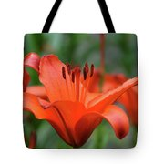 Gorgeous Blooming Orange Lily Flowering In A Garden Tote Bag