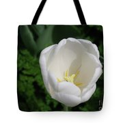 Gorgeous Blooming White Tulip Flower Blossom In Spring Tote Bag