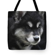 Gorgeous Eight Week Old Alusky Puppy Dog Tote Bag