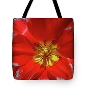Gorgeous Flowering Red Tulip With A Yellow Center Tote Bag