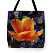 Gorgeous Flowering Yellow And Red Blooming Tulip Tote Bag