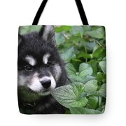 Gorgeous Fluffy Alusky Puppy Peaking Out Of Plants Tote Bag