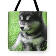 Gorgeous Fluffy Black And White Husky Puppy In Grass Tote Bag