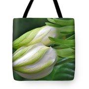 Best Buds Gorgeous Gardenia Flower Buds Tote Bag