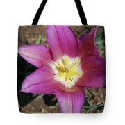 Gorgeous Light Purple Tulip With Yellow Stamen Tote Bag